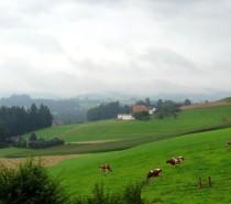 Burgdorf- Suíça: conhecendo a fabricação do queijo Emmental