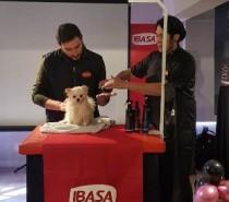 Laboratório Ibasa realiza Workshop Técnico  focado na tosa comercial para cães Spitz