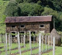 De colonos do vinho a agricultores do turismo: mestre em História pela UCS lança livro que resulta de seu projeto de pesquisa