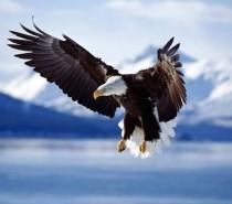 A águia de asas partidas – reflexão
