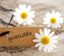 Entre problemas e bênçãos – por Momento Espírita