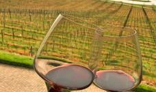 Prova dos Dez: degustação de vinhos finos acontece mensalmente na Serra Gaúcha