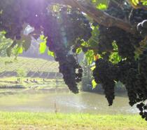 Degustações de vinhos e uvas marcam programação de março nas Vinícolas dos Altos Montes