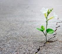 Reflexão – Nos dias difíceis