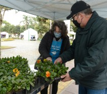 Pedágio Solidário arrecada 500 quilos de alimentos na Praça Dante
